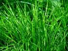 草刈り・引っ越し手伝い・軽作業